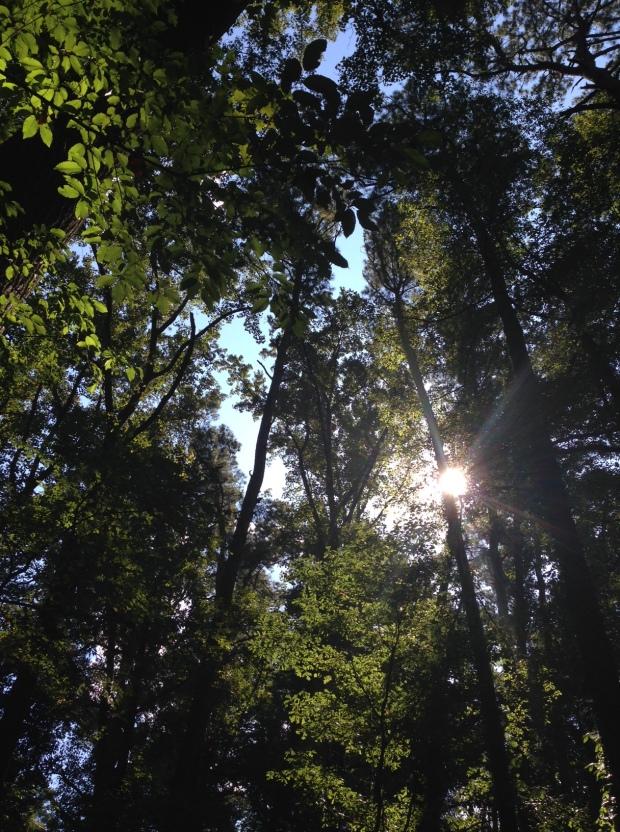 Woodlands Gardens sunlight